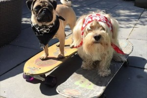 Our dogs skating!